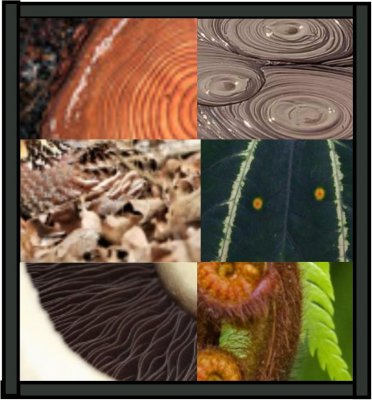 DISCOVER - Patterns In Nature