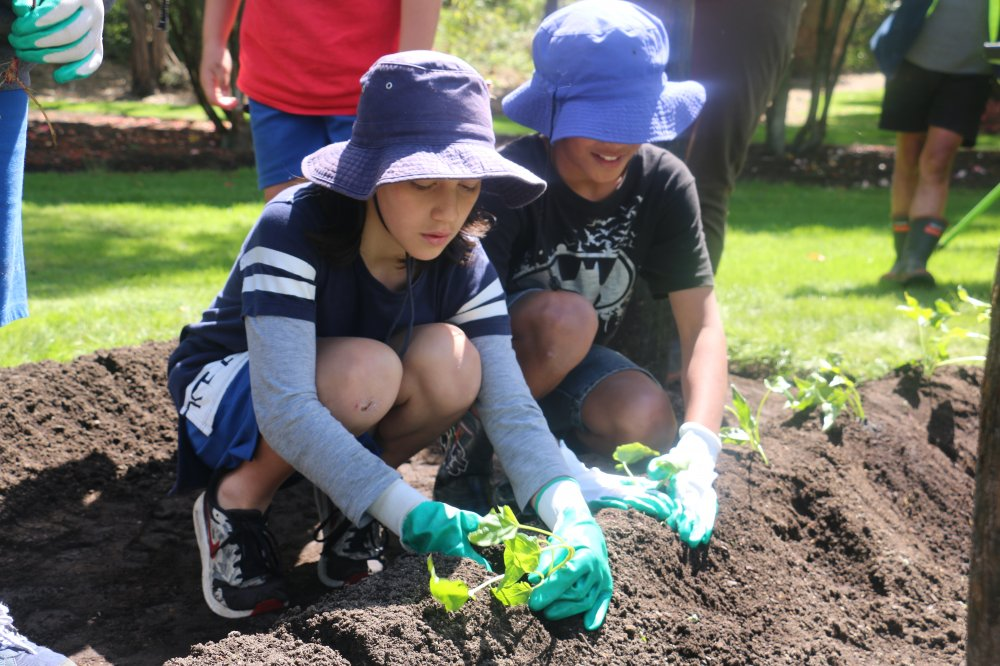 Māra Kai – A Traditional Māori Garden